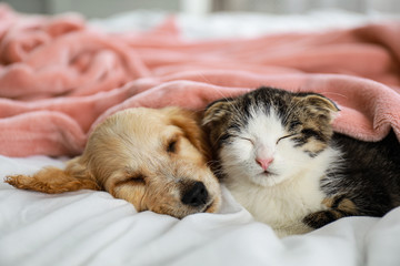 Adorable little kitten and ...