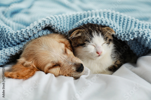 Obraz Adorable little kitten and puppy sleeping on bed - fototapety do salonu