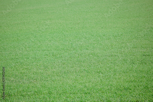 Poster Olive fresh green grass field background