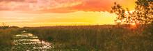 Everglades Florida Wetland Pan...
