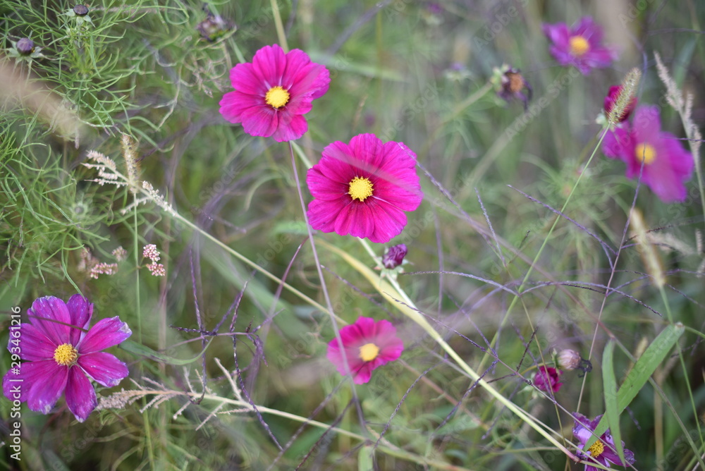 Tender background with meadow flowers