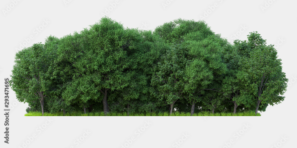 Fototapety, obrazy: Forest isolated. Image useful for banners nd poster or photo maipulations. 3d rendering.