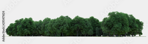 Forest isolated. Image useful for banners nd poster or photo maipulations. 3d rendering. - 293471624