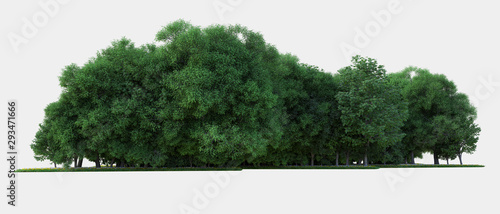 Forest isolated. Image useful for banners nd poster or photo maipulations. 3d rendering. - 293471666