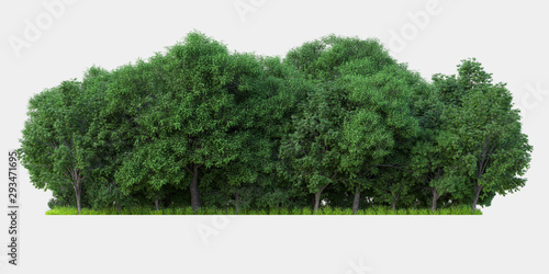 Forest isolated. Image useful for banners nd poster or photo maipulations. 3d rendering. - 293471695