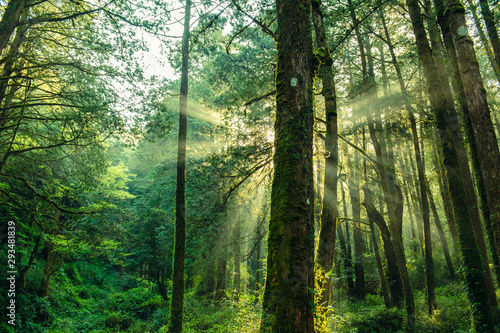 sun beams in the forest in ali mountain Canvas Print