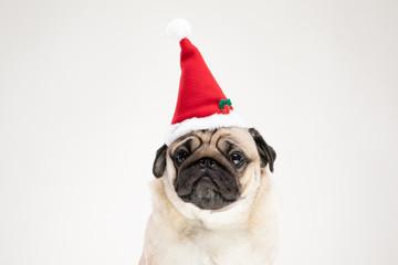 Adorable Pug wearing santa ...