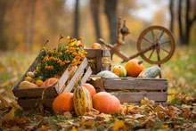 Autumn Decor In The Garden. Pu...