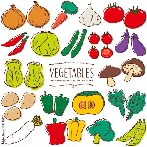 Fototapeta 野菜 手描き イラスト 色 obraz