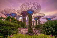 Gardens By The Bay With Supert...