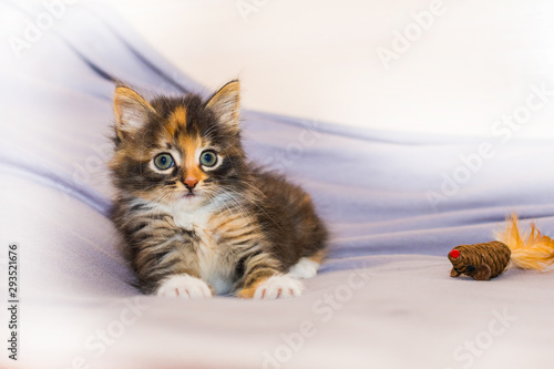 Valokuva cute kitten playing with toy on light background