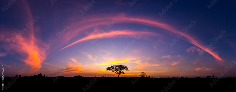 Fototapeta Panorama silhouette tree in africa with sunset.Tree silhouetted against a setting sun.Dark tree on open field dramatic sunrise.Typical african sunset with acacia trees in Masai Mara, Kenya