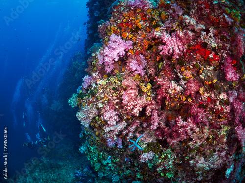 Fototapety, obrazy: soft coral
