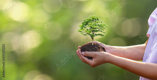 Fotografie, Tablou  Tree planting on volunteer family's hands for eco friendly and corporate social