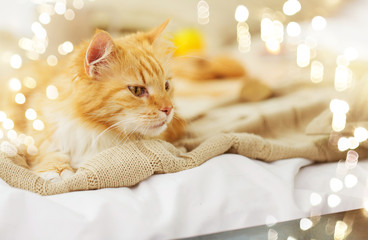 pets and hygge concept - red tabby cat lying on blanket at home in winter