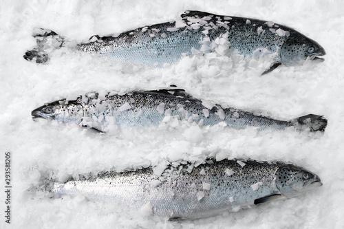 Fototapeta Fresh Norwegian salmon on ice in supermarket obraz