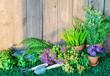 Leinwandbild Motiv Gardening tools and flowers