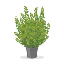 Bright Green Barberry Bush Gro...