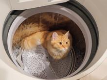 洗濯機で遊ぶ猫(マン...