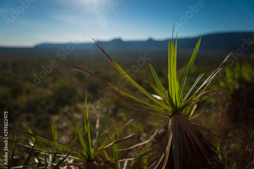 Photo  The Cerrado biome is a Brazilian savanna that is threatened by deforestation