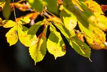 Autumn Leaves On Black Backgro...