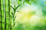 Many bamboo stalks on green background