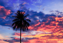 Coconut Tree Silhouette And Sk...