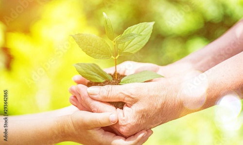 Green plant in human hands on blurred background