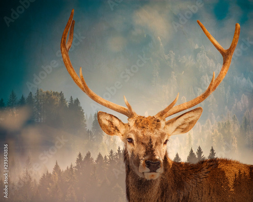 Papiers peints Cerf double exposure of deer and pine forest - save our planet - fight global warming