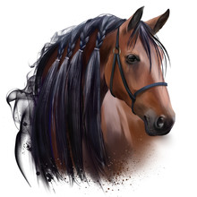 The Horse's Head. Watercolor D...