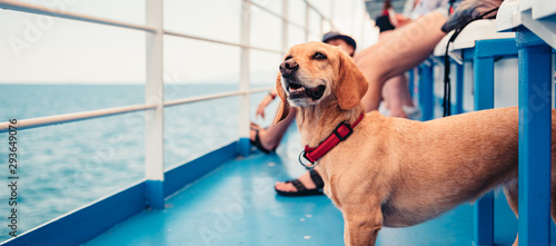Fotomural  Dog traveling on the ferry