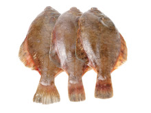 Psetta Maxima (Turbot Fish) Is...