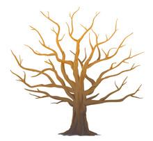 One Wide Massive Old Oak Tree ...