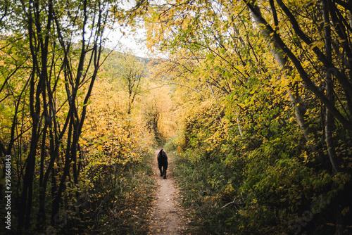 Fototapeta A dog walking on a trail surrounded by fall foliage.  obraz na płótnie