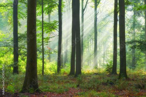 Photo sur Aluminium Route dans la forêt Beautiful morning in the forest