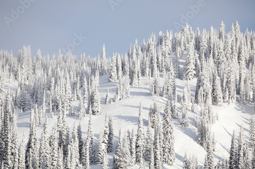 Peaceful scene of snow covered trees on a moutainside in British Columbia, Canada.