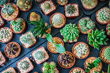 Cave Cactus!