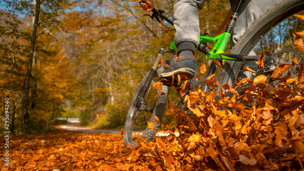 Fototapety, obrazy: CLOSE UP: Unrecognizable man rides mountain bike into a pile of fallen leaves