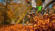 CLOSE UP: Unrecognizable Man Rides Mountain Bike Into A Pile Of Fallen Leaves