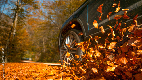 Fényképezés LOW ANGLE: Large 4x4 vehicle drives along a road full of brown fallen leaves