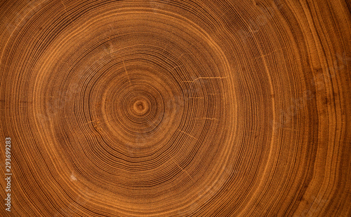 Photo sur Toile Spirale Detailed warm dark brown and orange tones of a felled tree trunk or stump. Smooth organic texture of tree rings with close up of end grain.