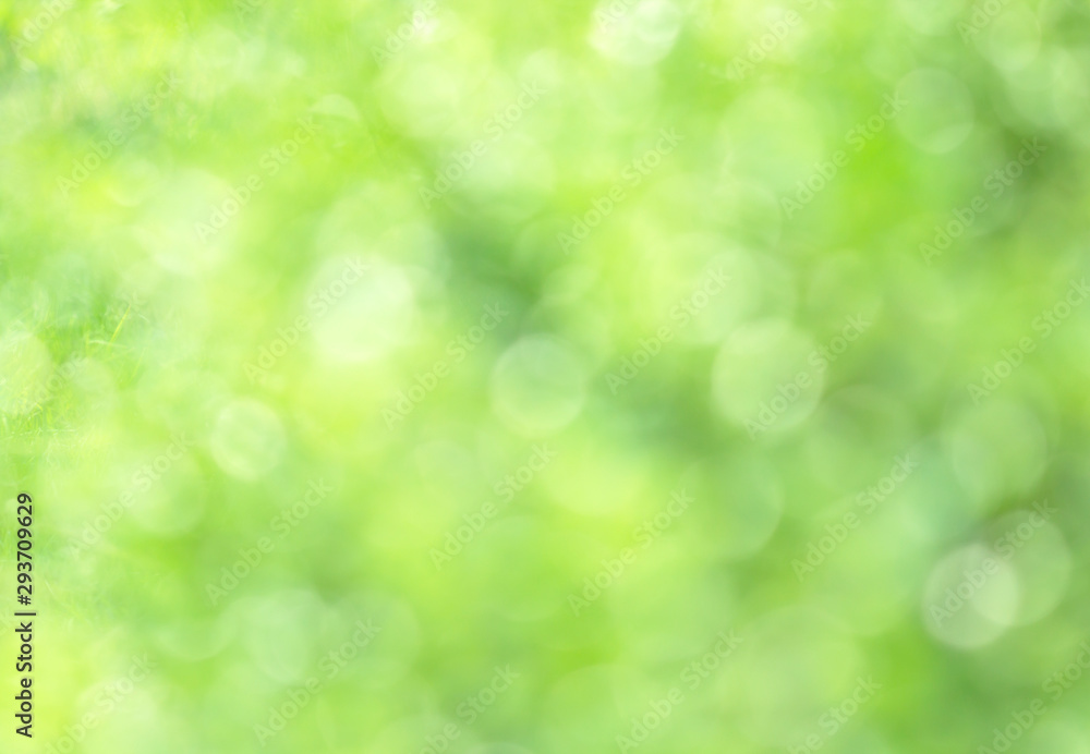 Fototapeta Sunny abstract green nature background, selective focus