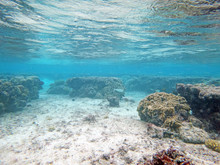 Diving On Guam Coral Reef, Coral Reef Sea Bed, Water Surface Underwater