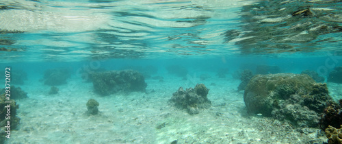 Diving on Guam coral reef, coral reef sea bed, water surface underwater Canvas Print