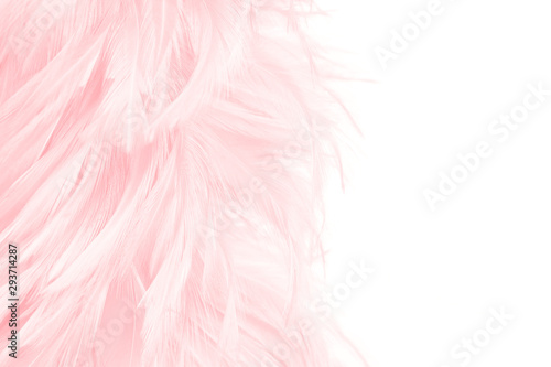 Photo  pink feather isolated on white background