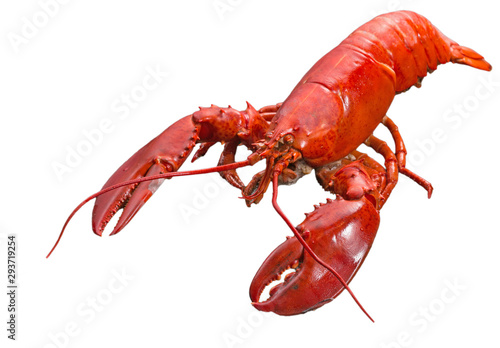Photo Close up steamed Canadian Lobster on isolted white background, Red Canadian Lobs