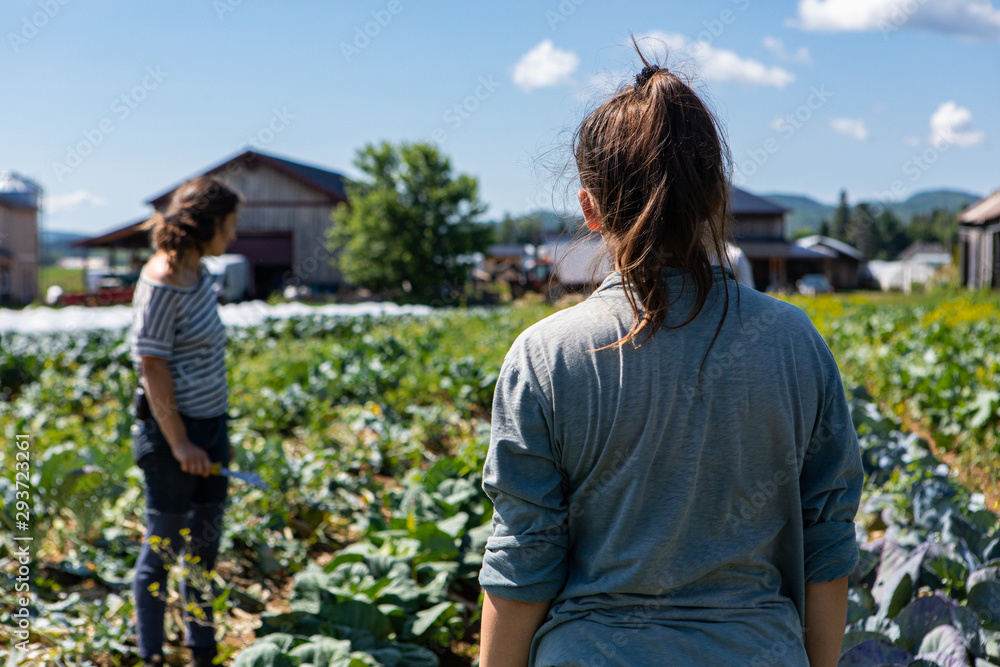 Fototapety, obrazy: Farmhands tend crops at ecological farm. Two farm helpers are seen from behind, checking the condition of crops on rural farmland against a blue sky with room for copy.
