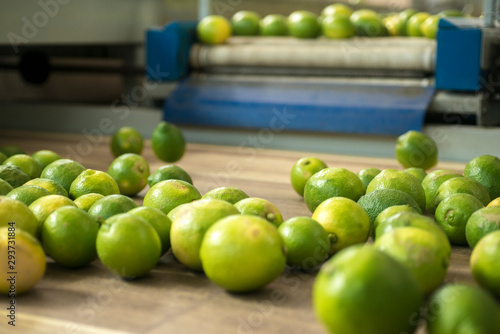 lemons on conveyor belt - 293731884