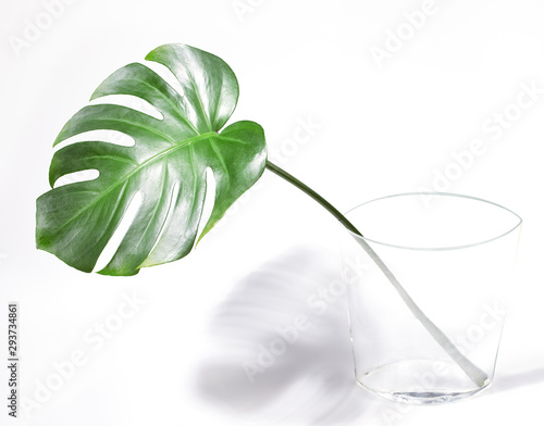 Green tropical palm monstera leaf in transparent glass vase on white background. Wall mural