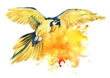 Yellow Parrot Ara Flies Spread...